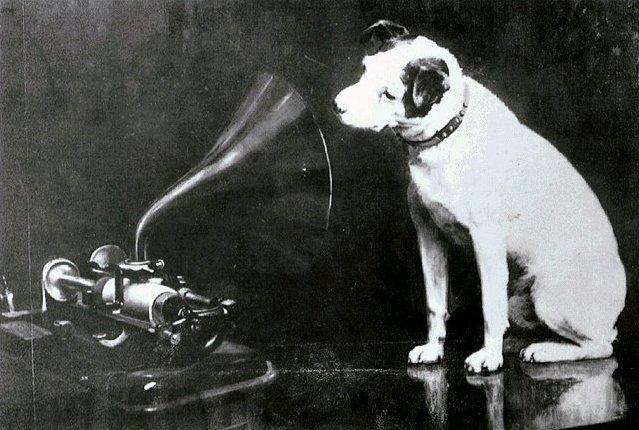 Phonograph-Dog