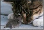 Year-C-Epiphany-7-Cat-Mouse