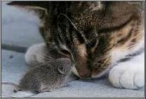 image from http://s3.amazonaws.com/hires.aviary.com/k/mr6i2hifk4wxt1dp/15120218/34e7a1f6-fb94-4af6-bff9-e2fe7106334d.png