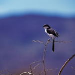 Year-B-Thanksgiving-Bird