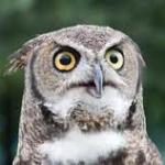 Year-C-OT-Advent-1-Owl