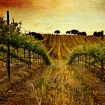 Year-A-OT-25-Vineyard-Square