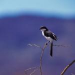 Year-B-Thanksgiving-Bird-Square
